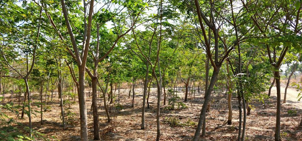 Trädplantering - Hållbarhet på Långholmen